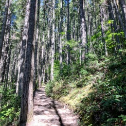 Mount Si hiking trail