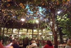 Lemon tree canopy over O Parucchiano
