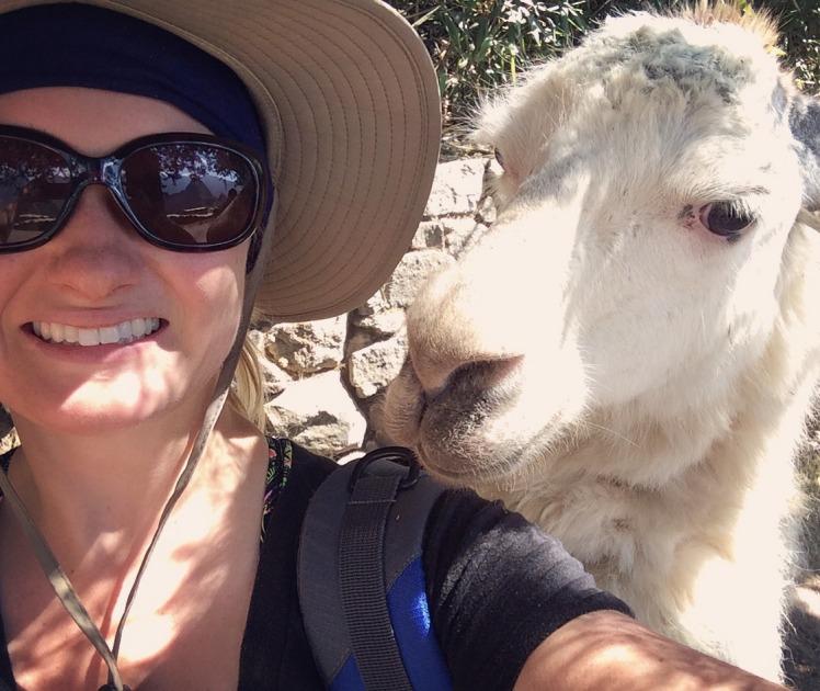 2.1470345736.llama-friend
