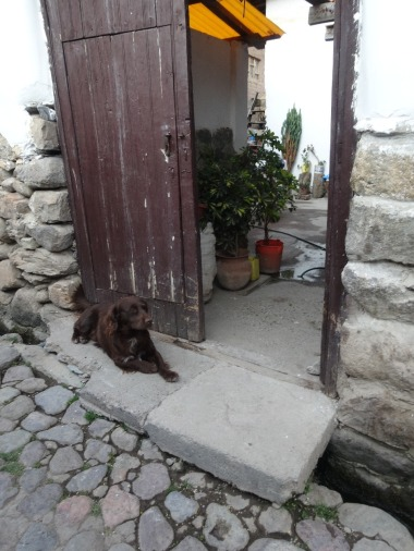 A stray dog in the alleyway in Ollantaytambo