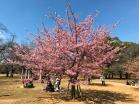 3.1488023484.1-yoyogi-park-early-blossoms