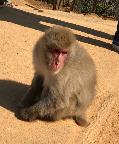 Arashiyama Monkey bro