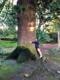 Giant trees in the park in Ponta Delgada