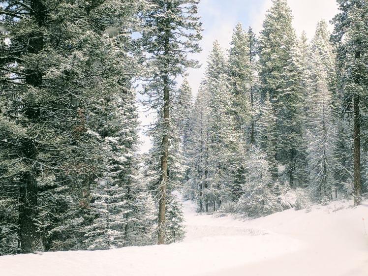 McCall Idaho snow covered trees