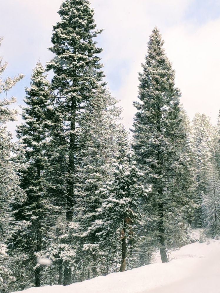 McCall Idaho snow covered trees