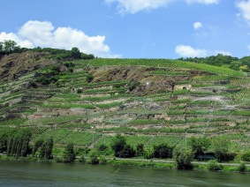 Koblenz riesling vineyards