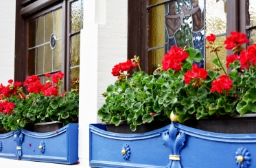 Rudesheim - flower boxes