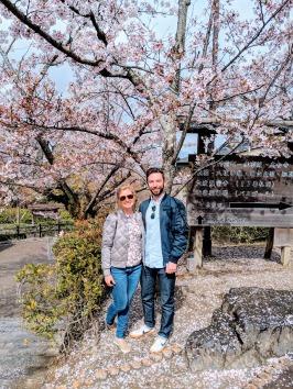 Cherry blossom at kiyomizudera