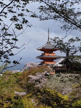 Kiyomizudera during sakura season Kyoto Japan