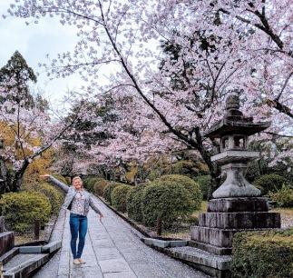 Kyoto Japan Sakura season