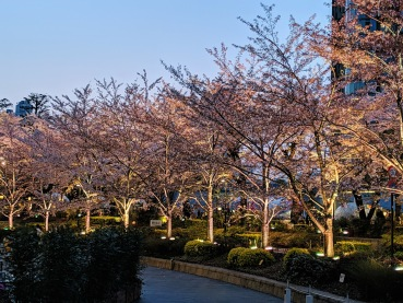 Roppongi Hills Sakura at night