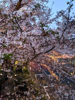 Roppongi Hills Sakura at night Tokyo