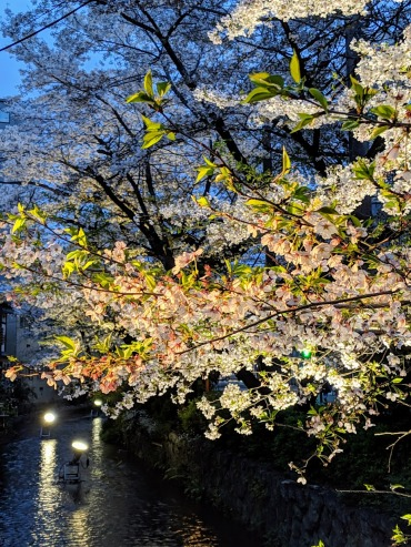 Sakura canal at Airbnb kyoto at night