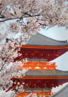 Kiyomizudera in sakura season Kyoto Japan