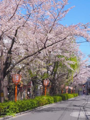Sakura block of airbnb kyoto Japan