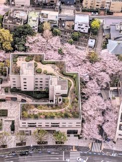 Sakura Street from the Mori Art Skydeck