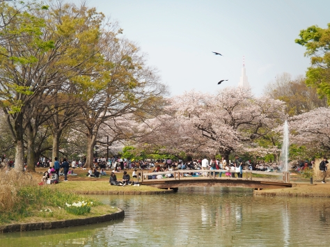 Yoyogi Park Sakura Season Tokyo